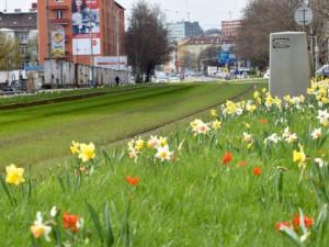 Na Nové sady přišlo jaro, šaliny se prohánějí mezi květy