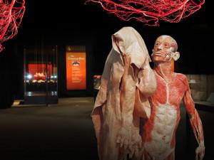 Do Brna míří expozice lidských těl, vystaví nenarozené plody i plíce kuřáka
