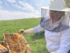 Medu bude letos více, věří jihomoravští včelaři před novou sezonou