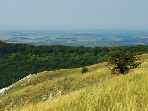 Pálavské Borytobraní: Dobrovolníci a ochránci zbavovali krajinu invazivní rostliny