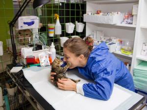 Majitelé zanedbávají kastrace svých koček, výsledkem jsou přeplněné útulky