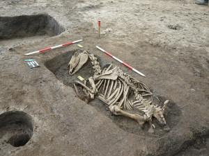 Archeology překvapilo pohřebiště koní v centru Brna