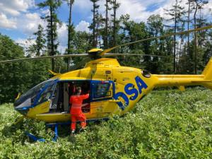 Na mladíka z Brněnska spadl při kácení strom, je ve vážném stavu v nemocnici