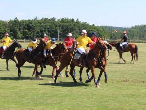 Přibývá hráčů koňského póla, nejlepší zázemí v Česku se nachází nedaleko Brna