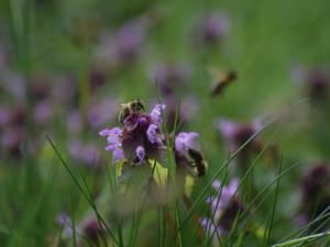 Trávu sečeme špatně. Nepravidelné kosení je pro hmyz i lidi užitečnější, říká odborník