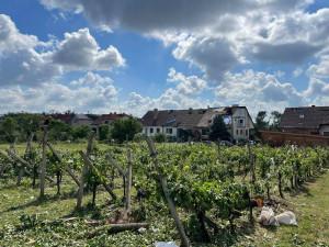 Jihomoravští vinaři sčítají škody po tornádu. Lidé na podporu kupují jejich vína