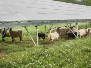 Zelená energetika může v Česku vytvořit přes 100 tisíc pracovních míst