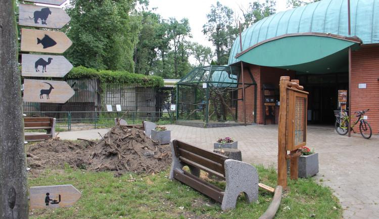 Zoo Hodonín otevře, až skončí likvidace škod na sídlišti Bažantnice