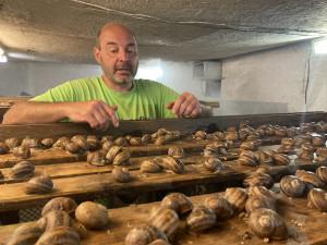 Jihomoravský král šneků chová na své farmě tisíce hlemýžďů