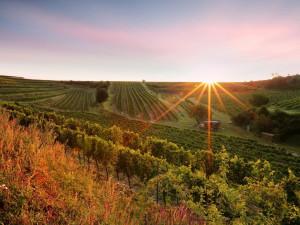 Cena za nejlepší bílé víno putuje na jižní Moravu. Vinařství z Ratíškovic podruhé ovládlo prestižní světovou soutěž