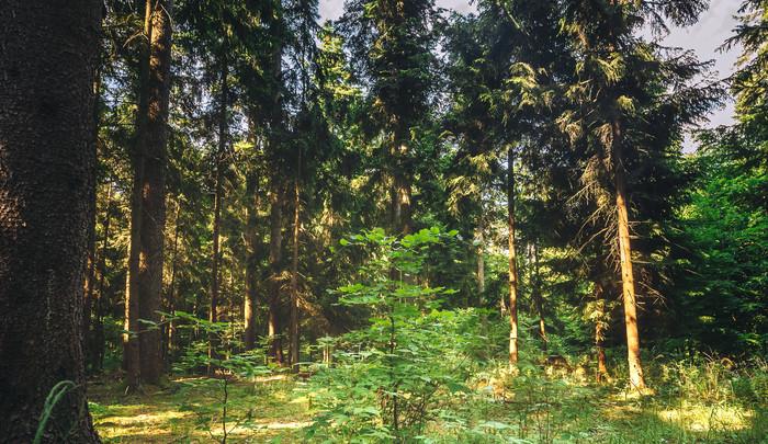 Vědci z Brna: Kůrovcová kalamita proměnila české lesy