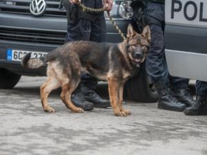 Na Brněnsku zazářil policejní pes, vyčmuchal obávané chmatáky