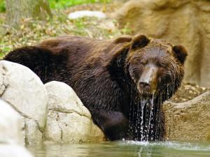Soud: Plošná regulace zoo a botanických zahrad byla nezákonná
