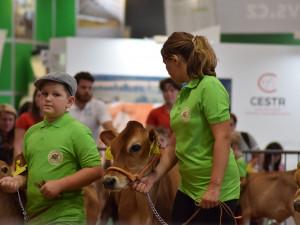 Do Brna přijela kráva Berta i vítězka Velké pardubické. Začal veletrh Animal Tech