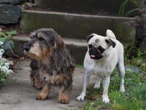 Jihomoravským pejskařům sníží poplatek za psy