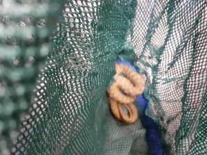 Ženu z Brna překvapila zásilka z ciziny, byl v ní had ze Svitavy