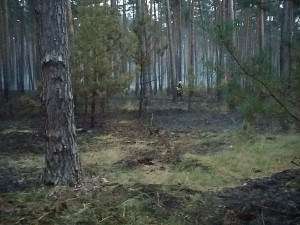 Na Hodonínsku hořelo deset hektarů lesa, škoda vyjde na statisíce korun