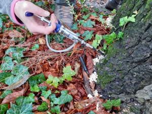 V Brně očkují stromy, aby nebyly nemocné
