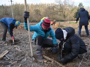 Kůrovcová kalamita se stabilizuje, brněnští lesníci mají méně práce s vysazováním
