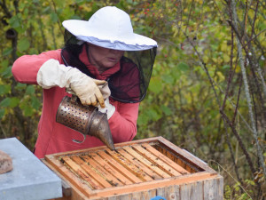 Včelaři bojují s nebezpečným škůdcem. Platí na něj vykuřování
